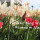 Tur-Tur w ruchu 2: Wiosna w Alanyi