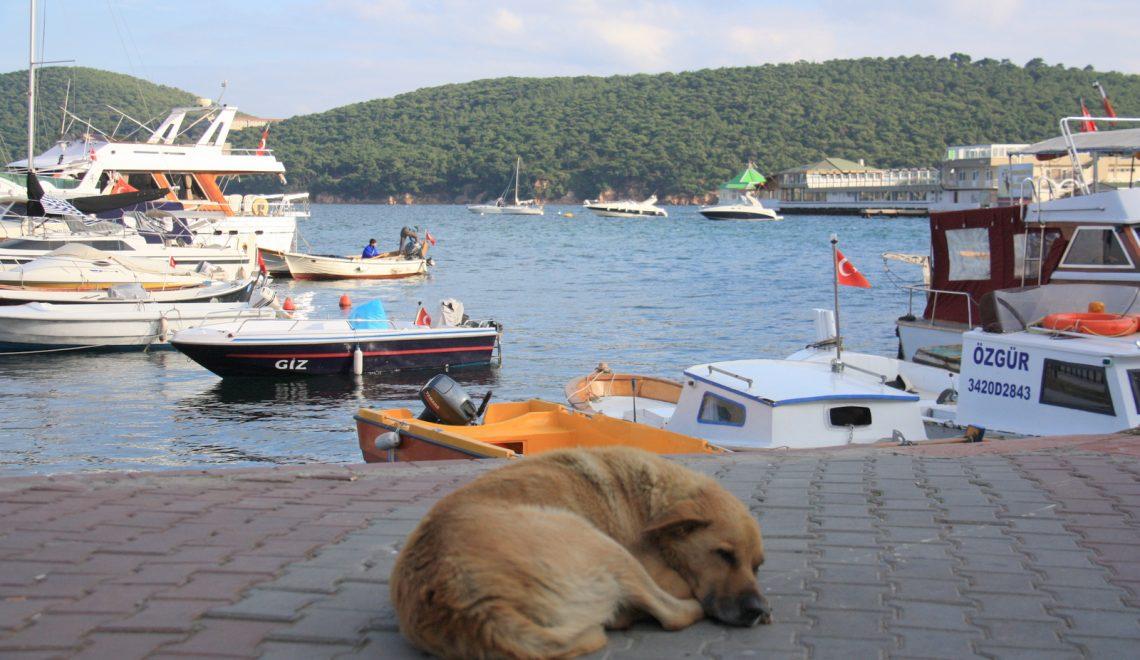 O tureckim podejściu do psów i kotów